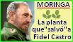 Moringa, la planta que salvó a Fidel Castro.