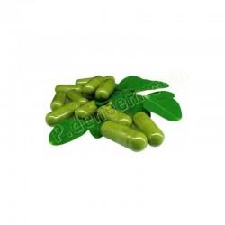Moringa Capsules 60 caps - 600 mg